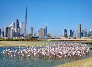 Top 5 places to visit from Dubai